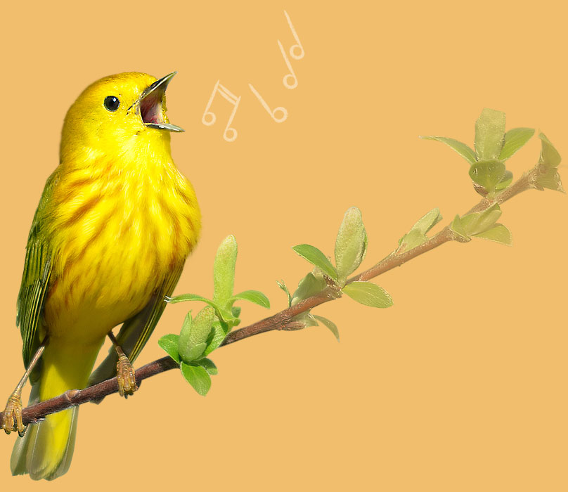 All About Bird Song