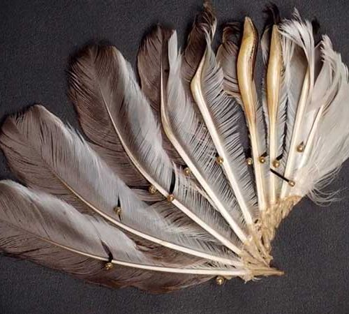Wing feathers of the Club-winged Manakin