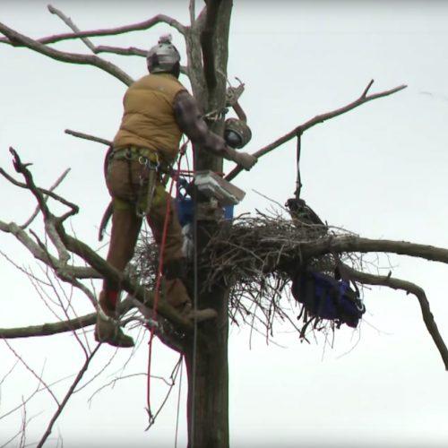 Installing Cornell's heron cam