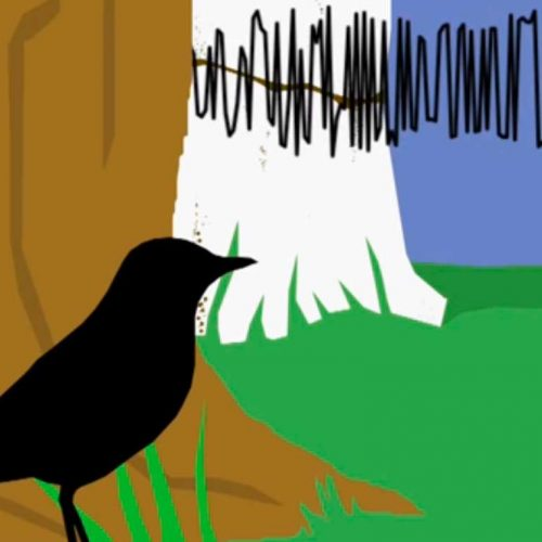Decoding the language of birds
