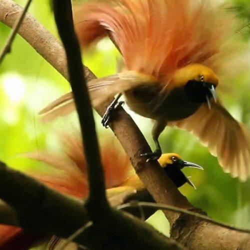 Peek at Night Birds While Hearing Their Nocturnal Calls   Bird