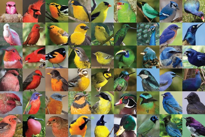 Cornell_Lab_of_Ornithology-Bird_feather_colors