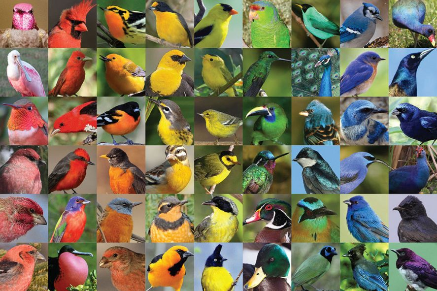collage of bird photos arranged to create a rainbow gradient