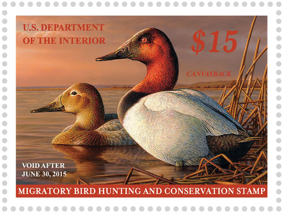 How Hunters And Artists Helped Save North Americas Waterfowl Bird