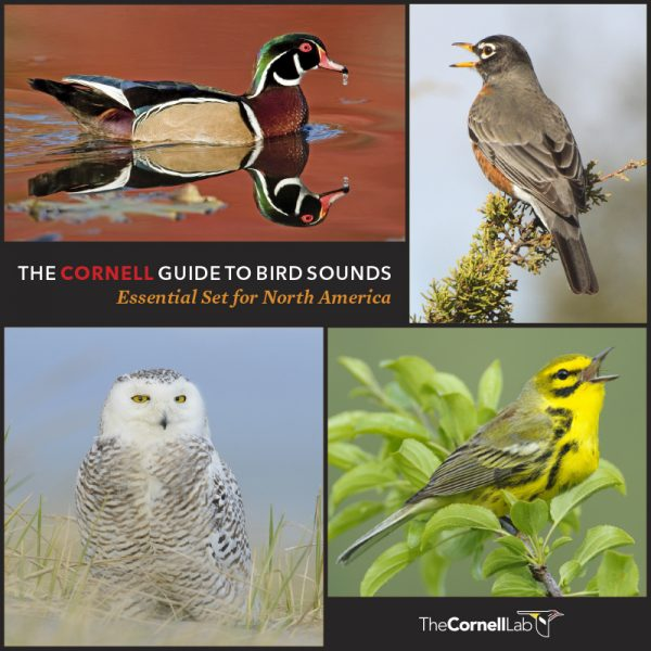 The Cornell Guide to Bird Sounds Essential Set for North America