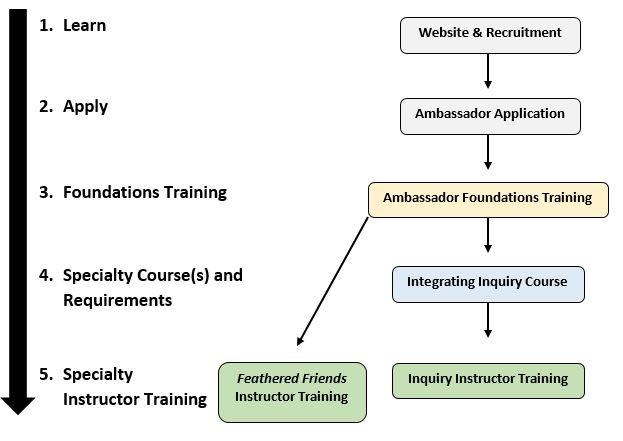 Ambassador Training Flowchart. 1. Learn through website and recruitment. 2. Apply through Ambassador Application. 3. Foundations Training 4. Specialty course requirements such as integrating inquiry course. 5. specialty instructor training such as Feathered Friends Instructor Training and Inquiry Instructor Training.