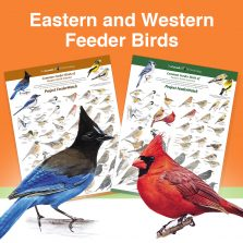 two sided poster with eastern and western feeder bird illustrations on either side