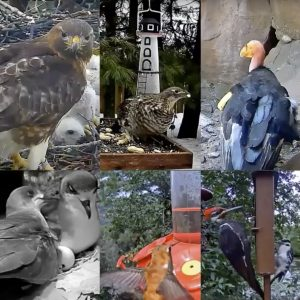 Collage of Bird Cams photos