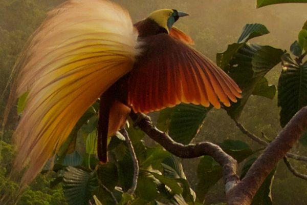Bird Academy • The Cornell Lab