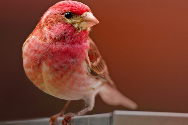 Learn More About Birds with These Courses | Bird Academy