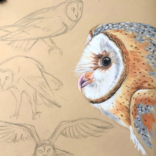 Barn Owls sketch and painting