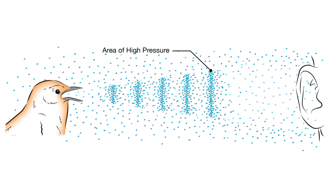 Sound is a pressure wave