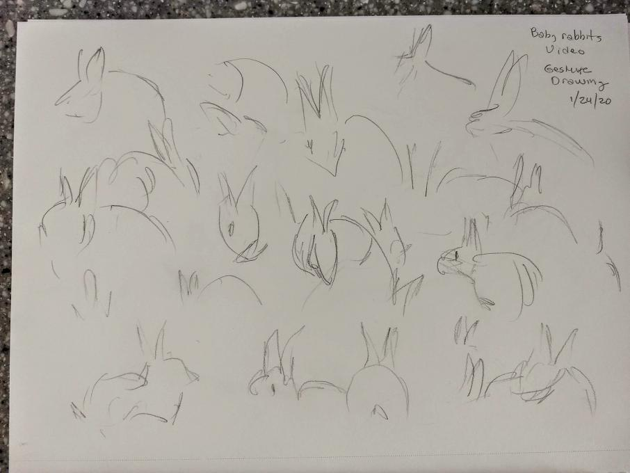rabbits gesture drawing