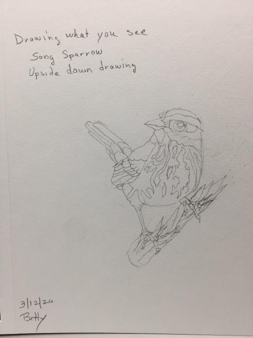 Song Sparrow upside down