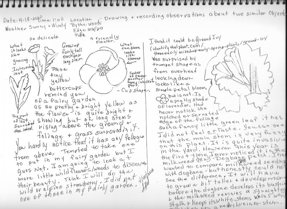 Sketch Nature Journaling and Field Sketching Flower Comparison