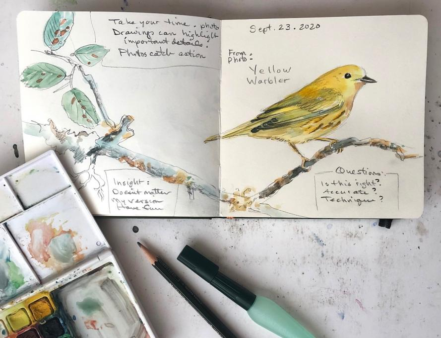 nature journaling 1 warbler crop