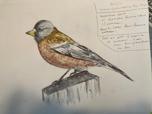 Gray-ccrowned Rosy-Finch