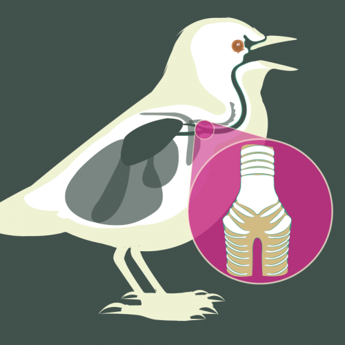 How Birds Sing thumbnail