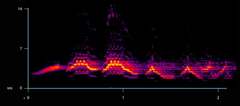 spectrogram-axes-veery